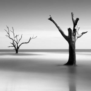 Bulls Island, Boneyard Beach, South Carolina, Black and White, Long Exposure, Tree, Water, Ocean, Fine Art, Ivo Kerssemakers