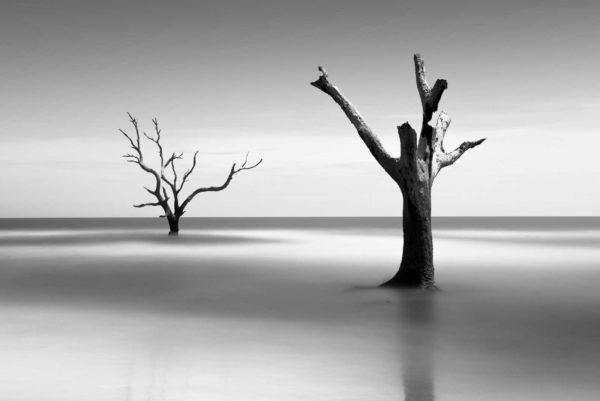 Bulls Island, Boneyard Beach, South Carolina, Black and White, Long Exposure, Tree, Water, Ocean, Fine Art, Ivo Kerssemakers