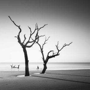 Tree, Bulls Island, Black and White, Long Exposure, South Carolina, Ivo Kerssemakers
