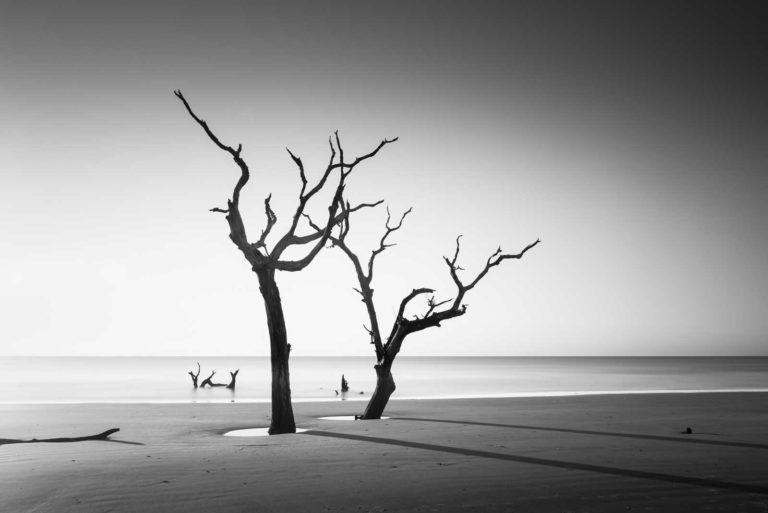Tree, Bulls Island, Black and White, Long Exposure, South Carolina, Ivo Kerssemakers