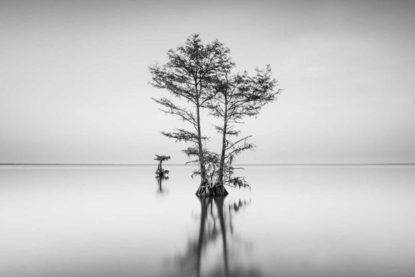 Cypress, Black and White, Long Exposure, Lake Moulltrie, South Carolina, Ivo Kerssemakers