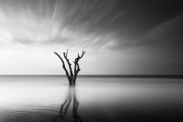 Bulls Island, South Carolina, Tree, Ocean, Cloud movement, Long Exposure, Black White, BW, Fine Art, Ivo Kerssemakers