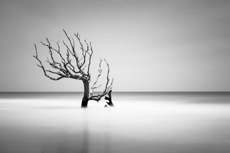 Bulls Island, Boneyard Beach, South Carolina, Black and White, Long Exposure, Tree, Water, Ocean, B&W, Fine Art, Ivo Kerssemakers