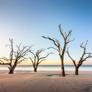Botany Bay, Edisto Island, Photography, South Carolina, Color Long Exposure, Ocean, tree, beach, Charleston, Long Exposure, Fine Art, Ivo Kerssemakers