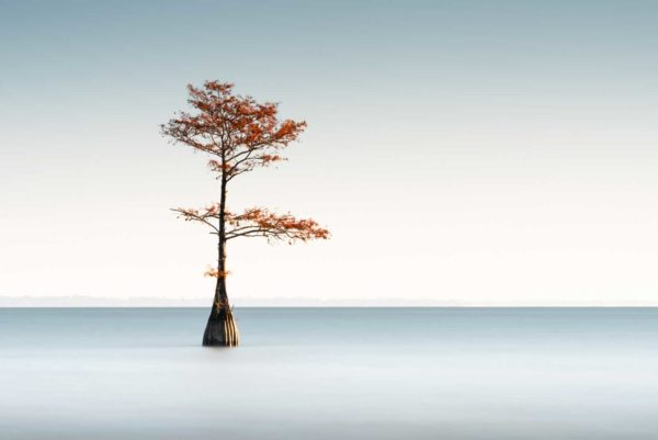 art print of a cypress tree on lake Moultrie, South Carolina, blue sky with bright orange fall foliage, by Ivo Kerssemakers