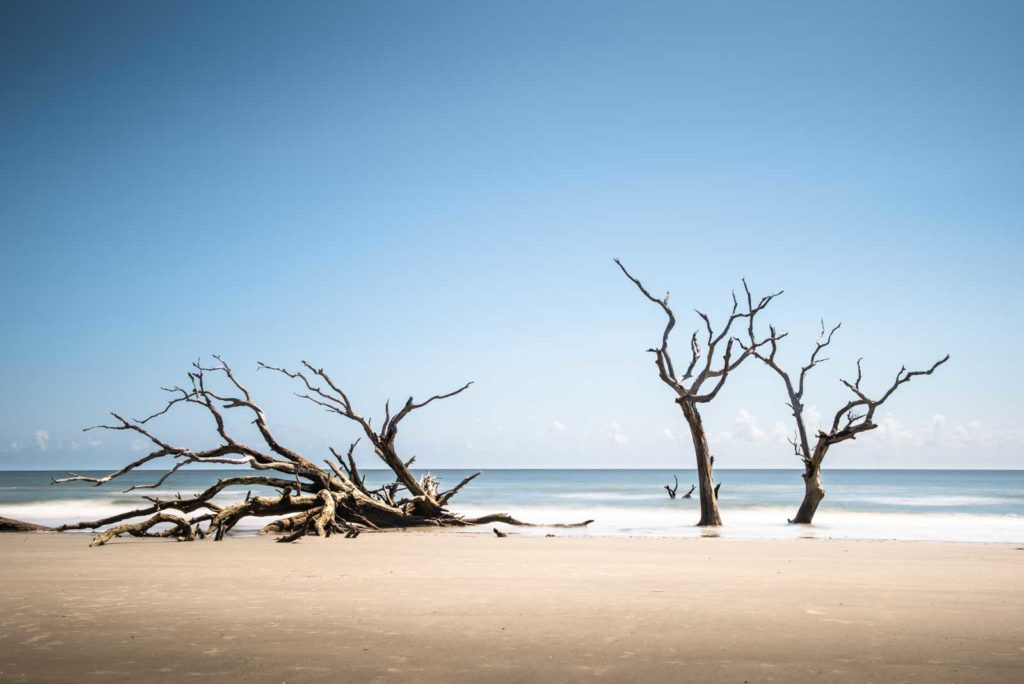 Bull Island, Boneyard Beach, South Carolina, Color, Long Exposure, Tree, Water, Ocean, Beach, Ivo Kerssemakers