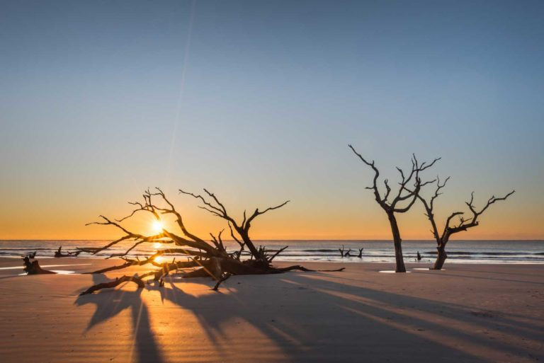 Boneyard, Beach, Bull Island, Sunrise, Tree, Ocean, South Carolina, Fine art, Ivo Kerssemakers