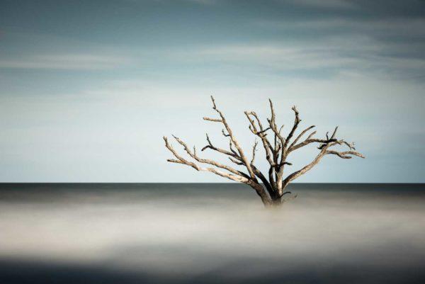 Botany Bay, Edisto Island, Photography, South Carolina, Color Long Exposure, Ocean, tree, beach, Charleston, Long Exposure, Fine Art, Ivo Kerssemakers