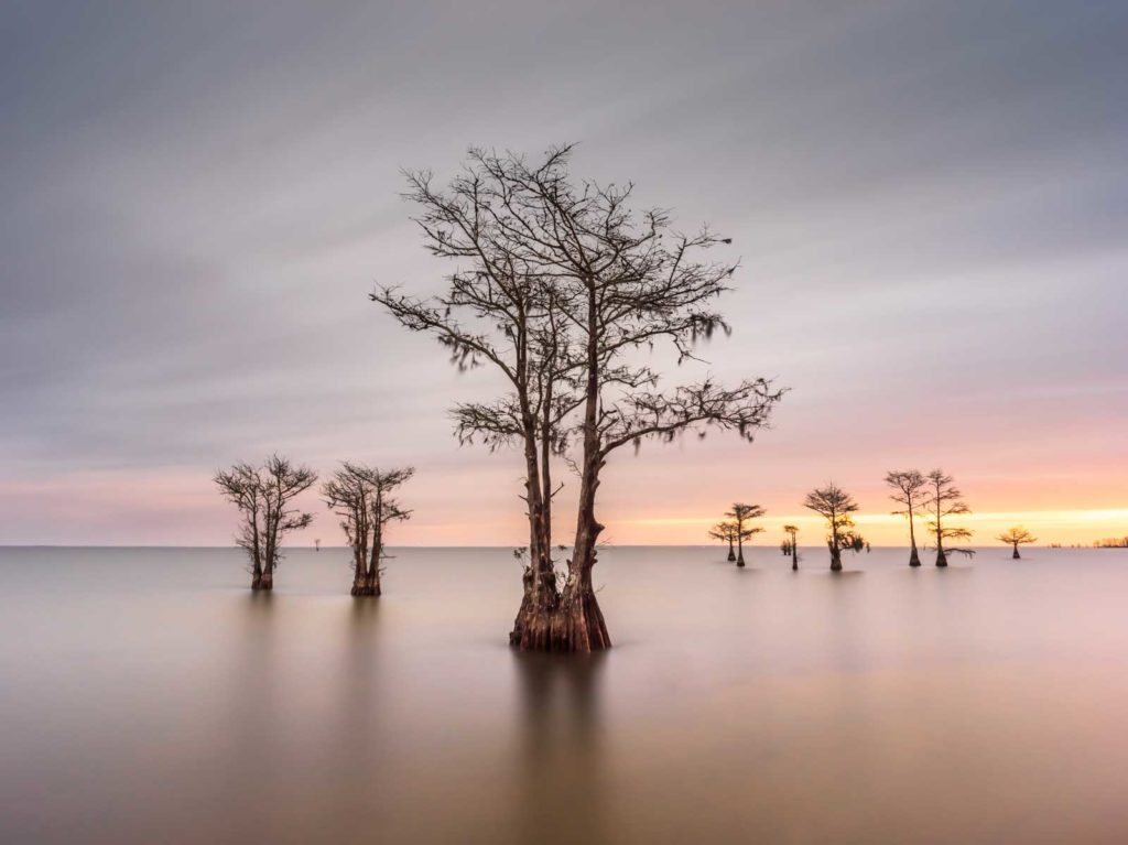 art print of Cypress trees on Lake Moultrie, South Carolina, with the sun coming up in the background by Ivo Kerssemakers