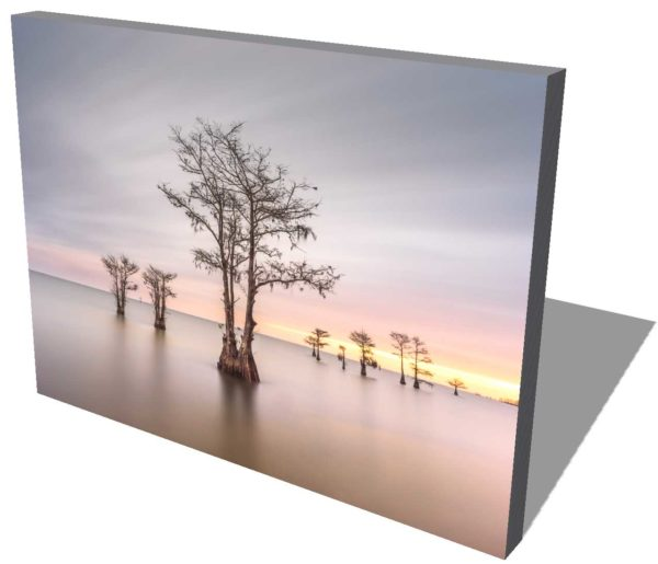 canvas print of Cypress trees on Lake Moultrie, South Carolina, with the sun coming up in the background by Ivo Kerssemakers
