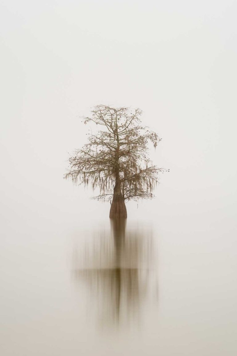 art print of a single cypress tree on lake Marion, South Carolina, isolated in the fog, by Ivo Kerssemakers
