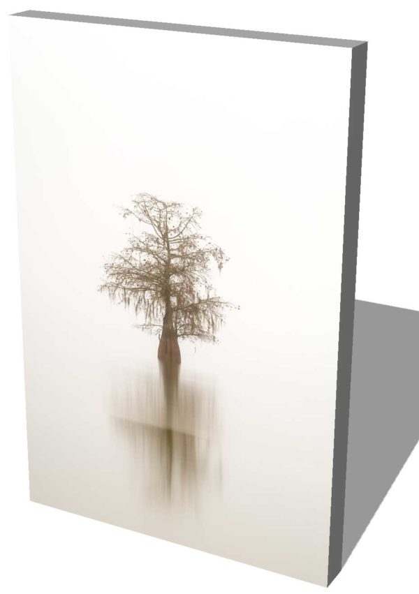 canvas print of a single cypress tree isolated in the fog, by Ivo Kerssemakers
