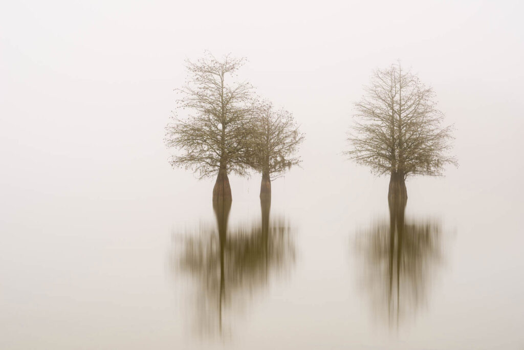 art print of three cypress trees on lake Marion, South Carolina, isolated in the fog, by Ivo Kerssemakers