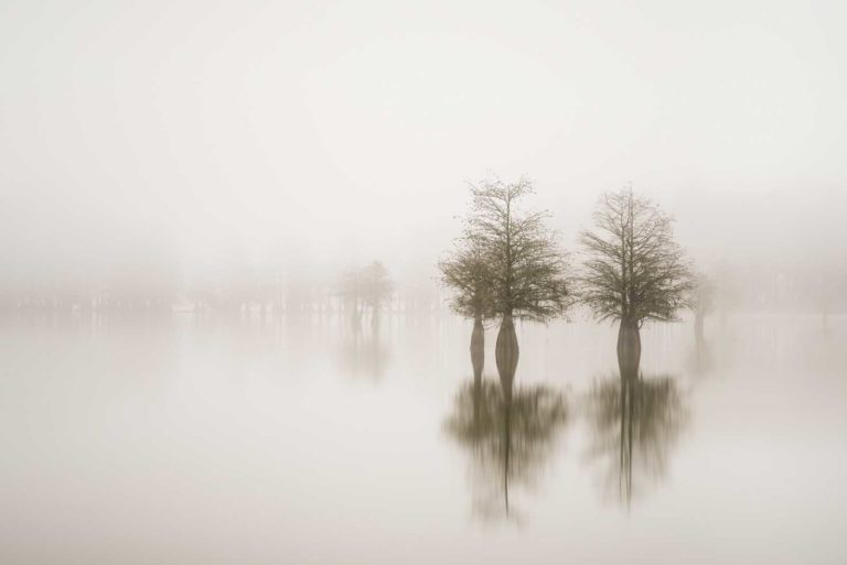 art print of cypress trees on lake Marion in the fog with trees emerging in the background out of the fog, by Ivo Kerssemakers