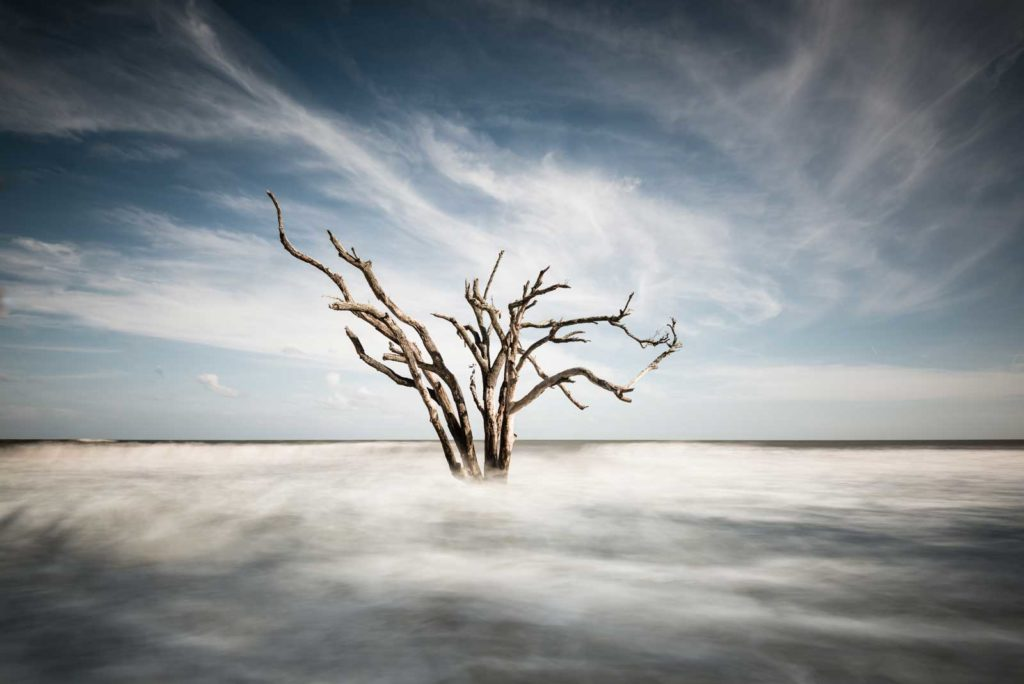 Botany Bay, Edisto Island, South Carolina, Color Long Exposure, Ocean, tree, beach, Charleston, Ivo Kerssemakers