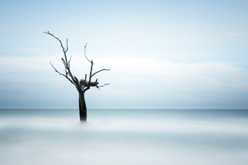 Bull Island, Boneyard Beach, South Carolina, Color, Long Exposure, Tree, Water, Ocean, Ivo Kerssemakers