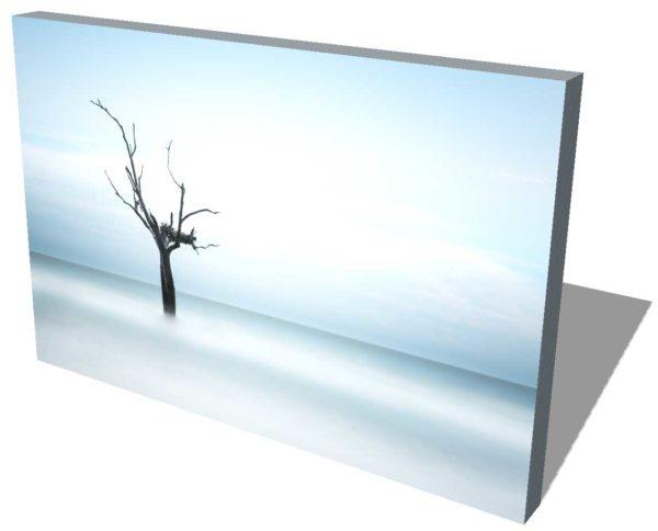 Bull Island, Boneyard Beach, South Carolina, Color, Long Exposure, Tree, Water, Ocean, Ivo Kerssemakers