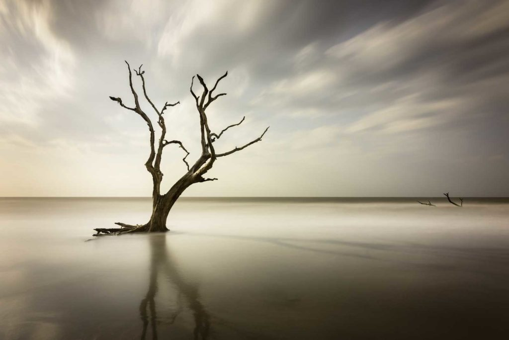 bull island, south carolina, sunrise, beach, ocean, tree, boneyard beach, ivo kerssemakers