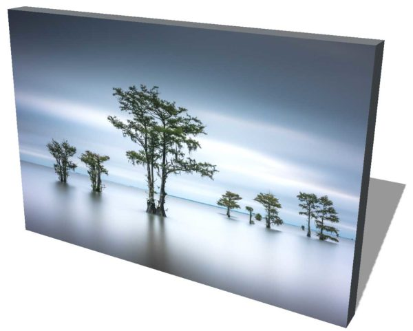 canas print of cypress trees on Lake Moultrie, South Carolina, green leaves and dark blue early morning light, by Ivo Kerssemakers
