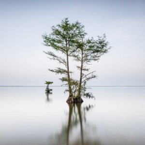 Long exposure photograph of a single cypress tree on Lake Moultrie, South Carolina, before sunset hours, by Ivo Kerssemakers