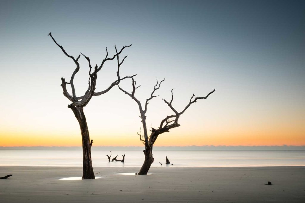 two trees on the beach of Bulls Island, South Carolina, with the orange glow of the sun about to come up in the background
