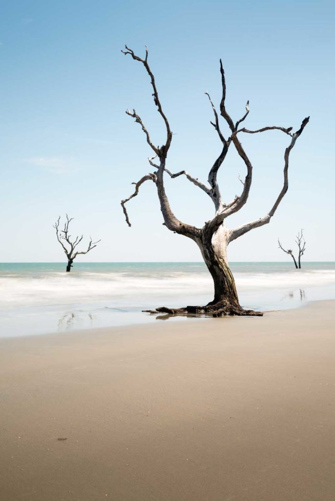 Bull Island, Boneyard Beach, South Carolina, Color, Long Exposure, Tree, Water, Ocean