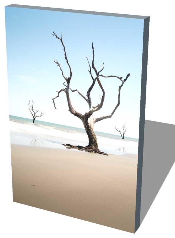 Bull Island, Boneyard Beach, South Carolina, Color, Long Exposure, Tree, Water, Ocean