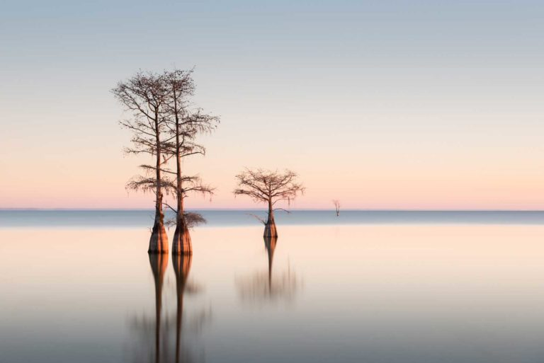 art print of cypress trees on lake Moultrie, South Carolina, with soft sunrise colors in the background, by Ivo Kerssemakers