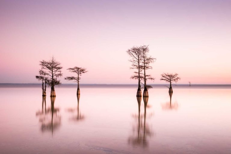art print of cypress trees on Lake Moultrie, South Carolina, with a bright pink sky right before sunrise, by Ivo Kerssemakers