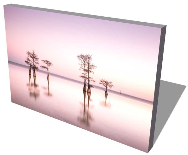 canvas print of cypress trees on Lake Moultrie, South Carolina, with a bright pink sky right before sunrise