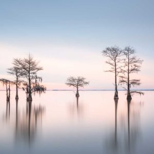 art print of a grouping of cypress trees on Lake Moultrie, South Carolina, in blue early morning light by Ivo Kerssemakers