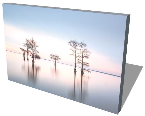 canvas print of a grouping of cypress trees on Lake Moultrie, South Carolina, in blue early morning light