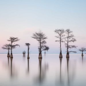 art print of a grouping of cypress trees on Lake Moultrie, South Carolina, with soft sunset light, by Ivo Kerssemakers
