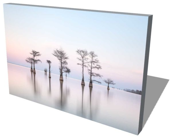 canvas print of a grouping of cypress trees on Lake Moultrie, South Carolina, with soft sunset light