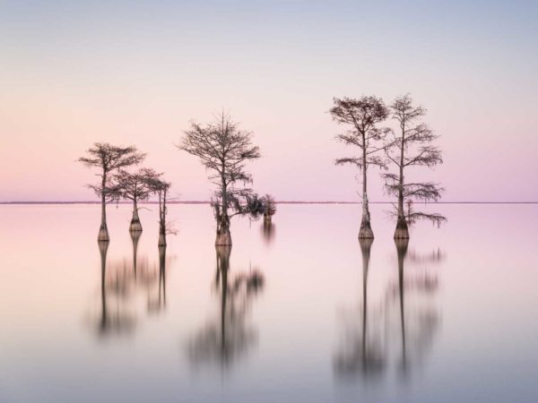 art print of a grouping of cypress trees on Lake Moultrie, South Carolina, in pink sunset colors by Ivo Kerssemakers