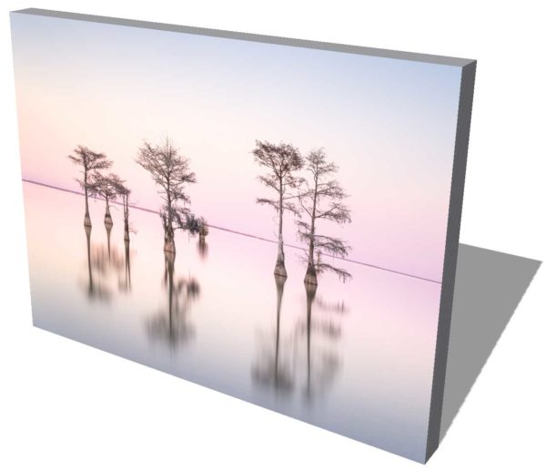 canvas print of a grouping of cypress trees on Lake Moultrie, South Carolina, in pink sunset colors by Ivo Kerssemakers