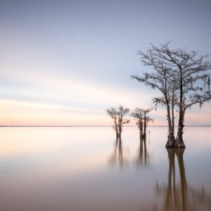 art print of cypress trees on Lake Moultrie, South Carolina, with sunrise colors in the background, by Ivo Kerssemakers