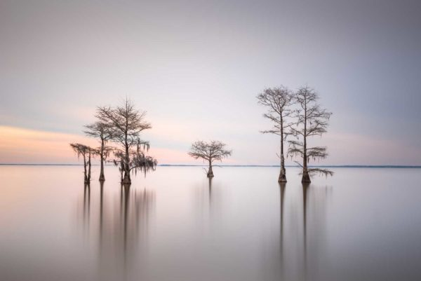 art print of a grouping of cypress trees on Lake Moultrie, South Carolina, in early morning light by Ivo Kerssemakers