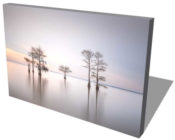 canvas print of a grouping of cypress trees on Lake Moultrie, South Carolina, in early morning light by Ivo Kerssemakers