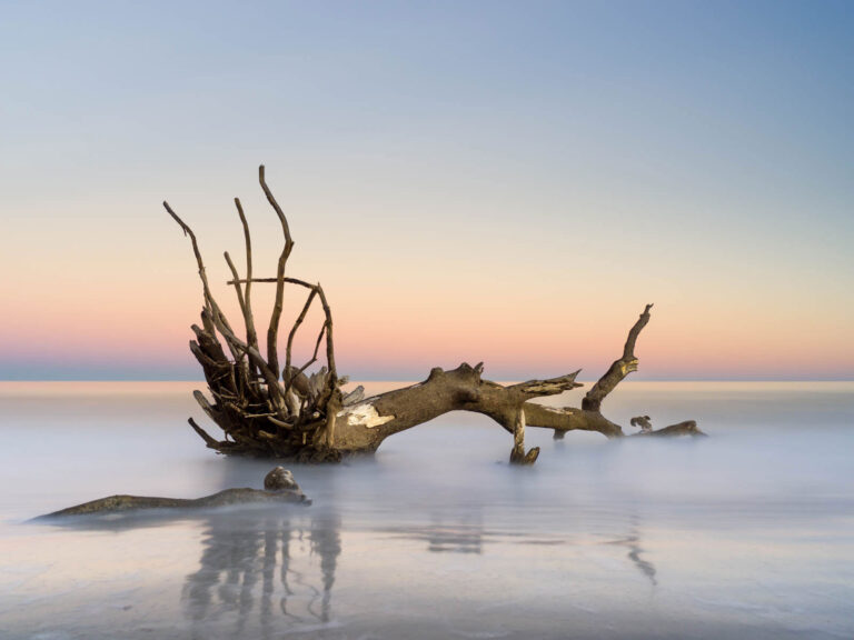 Long exposure of fallen tree in the ocean on Hunting Island, South Carolina by Ivo Kerssemakers