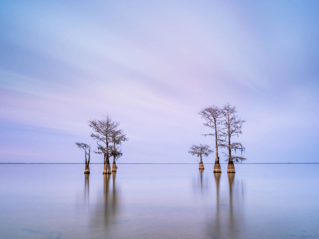 art print of a grouping of cypress trees on Lake Moultrie, South Carolina, after sunset hours, by Ivo Kerssemakers